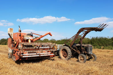 Traditional harvesting, the classic way!